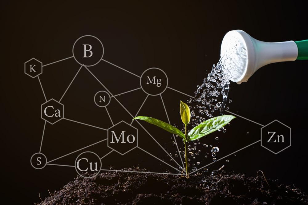 Dlaczego rosliny potrzebuja azotu