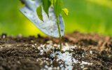 Czym nawozic rosliny